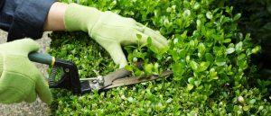 bitki bakım firması